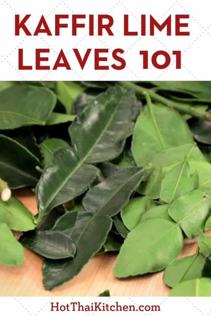 Kaffir lime leaves is a staple ingredient in Thai cooking. Here's everything you need to know to get cooking with them. #thaifood #thaiingredient #Thaicooking #hotthaikitchen